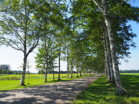 tree lined street in hokkaido