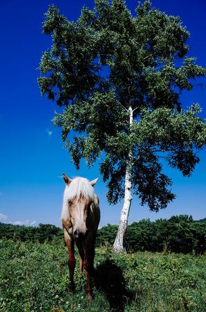horse in summer pasture Imagens