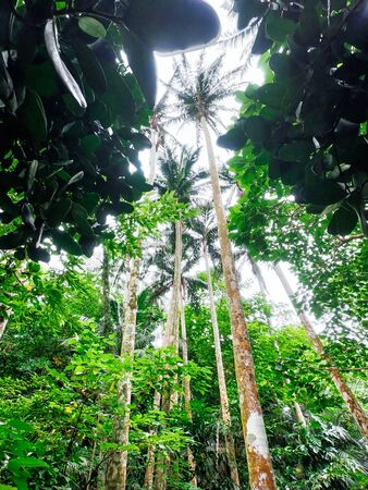 mangrove forest in iriomote island Фото со стока