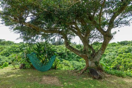 hammock under tree in ishigaki island 写真素材