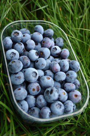 Blueberry photo