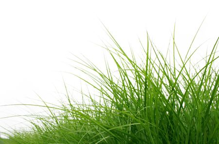grass green close up isolated on white Stock Photo - 5737266