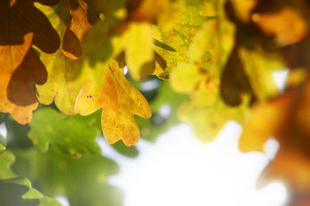 colorful fall leaves closeup against white background Stock Photo - 5737269