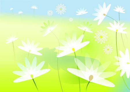 marguerites: illustrated white marguerites in a summer landscape Stock Photo