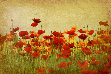 окружающей среды: field of red poppies on ambient background Фото со стока