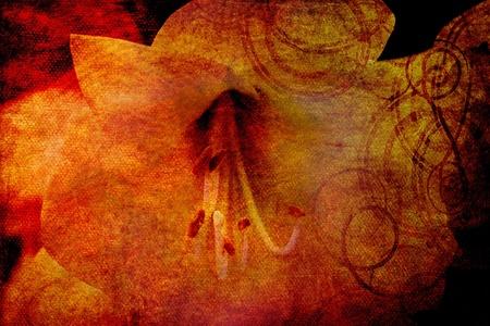 ambient magnolia on canvas grunge texture photo