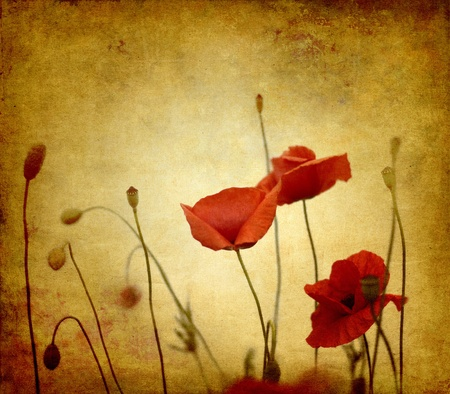 red poppies on ambient background