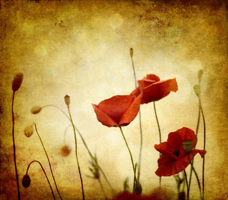red poppies on green field: vintage poppies on ambient background grunge