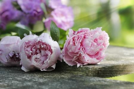 pfingstrosen: heimischen Garten Blumen Pfingstrosen auf Holzbrett