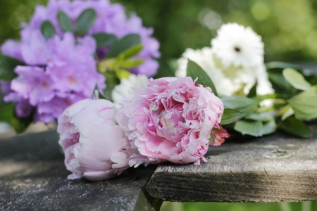 pfingstrosen: Pfingstrosen und heimischen Garten Blumen auf alten hölzernen Planken