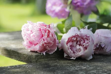fleurs de jardin à domicile (pivoines) sur une planche en bois