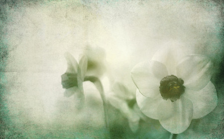 daffodils toned with added different textures, mourning card vintage concept