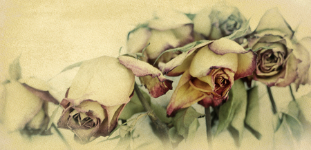 faded roses textured on old paper background, faded flower concept mourning motif Stock Photo