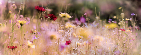 A wildflower meadow panorama in warm sunlight. View on fresh colorful flowers in summer. Natural growth areas concept. Stock fotó