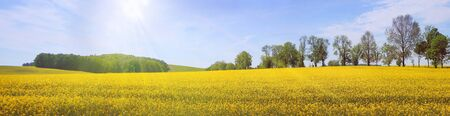 Panorama view on a rural tranquil landscape with lines of trees, woods and fields, in North Germany.