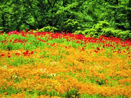 フラワー ガーデン赤とオレンジ