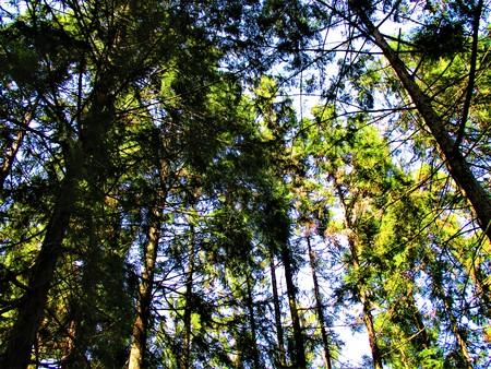 Big Woods 版權商用圖片
