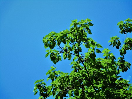 Blue and green 版權商用圖片