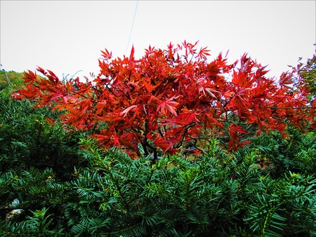 Red and green trees in a sunny day in autumn 写真素材