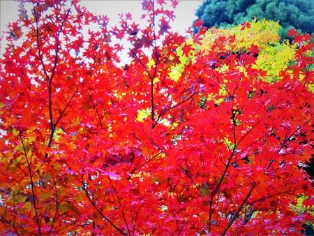 Beautiful red autumn tint