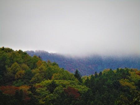 Woods on a rainy day 写真素材
