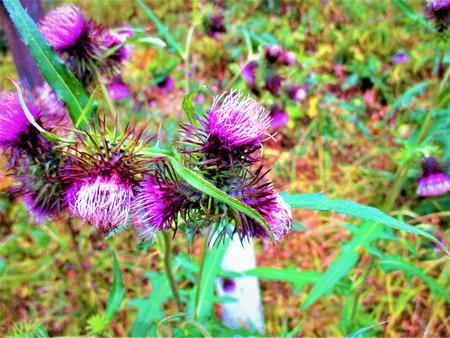 Pink wildflowers 写真素材