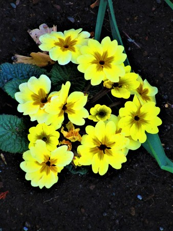 Flowers yellow in winter