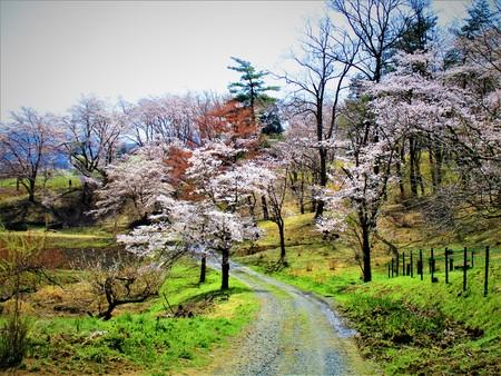 Cherry tree road