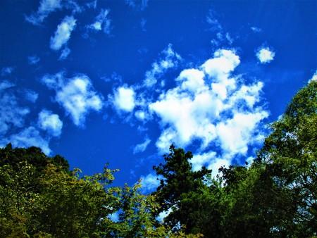 Summer sky 版權商用圖片