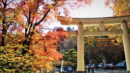 Torii and autumn leaves 写真素材