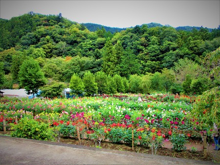 Mountains and the dahlia garden