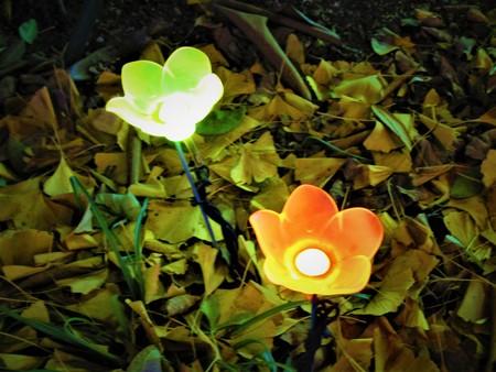Flowers of light