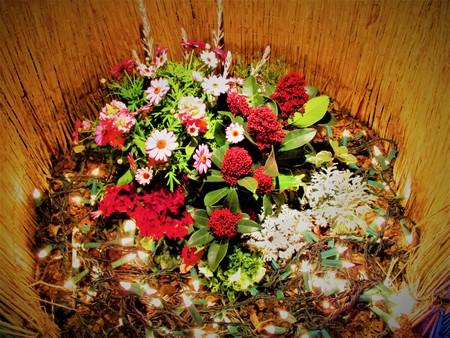 Flowers of the winter night