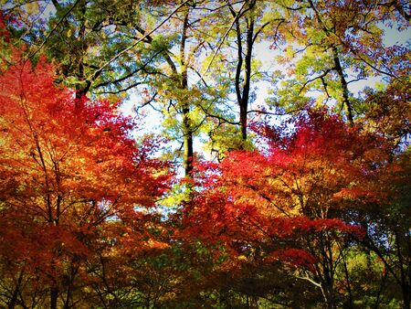The color of autumn leaves
