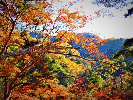 Autumn of nature