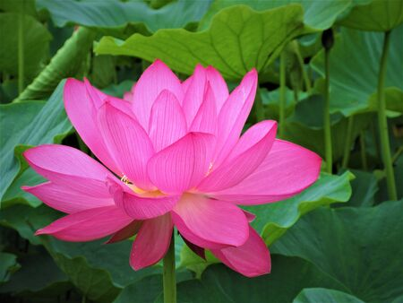 The Time of Lotus