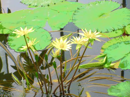 Yellow flowers by the water 写真素材