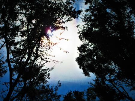 Forest and sky.