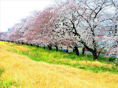 The season of spring