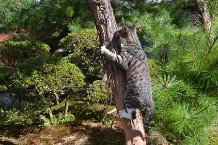 公園でクライミング ツリー猫