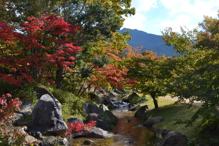 japanese maples: Japanese maple in the park