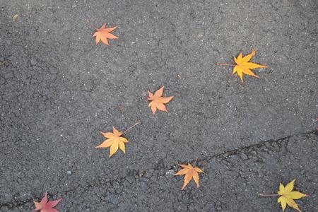 秋の葉の多く