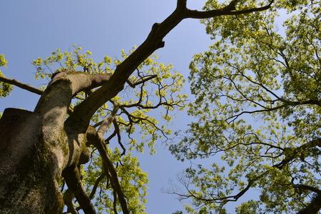 新鮮な緑の木の葉 写真素材