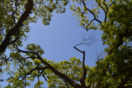 上空を多くの新鮮な緑の新緑の色 写真素材