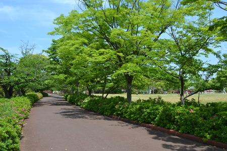 庭と青い新緑の道