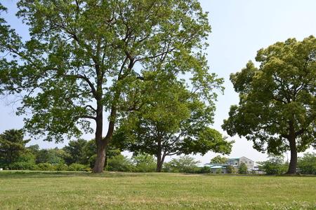 春の公園の芝生広場