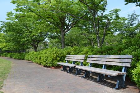 公園の新緑とトレイルします。