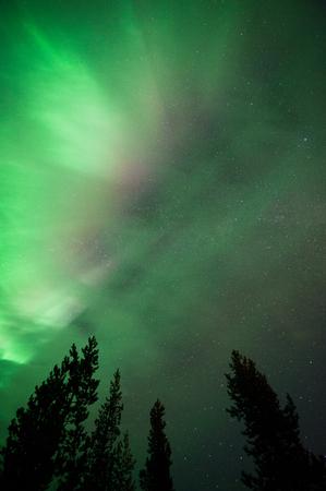Aurora borealis corona above boreal forest treetops in Finnish Lapland.