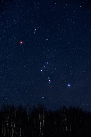 Cielo stellato e costellazione di Orione sopra la foresta di betulle nel cielo invernale. Archivio Fotografico