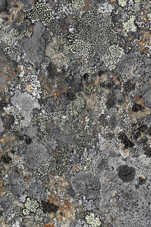 Natural texture of lichen on rock surface